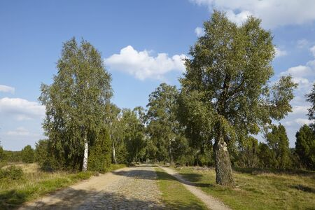 sustainable tourism: A small roadway made of cobblestone leads throgh the Luneburg Heath (Germany) from Wilsede to Egestorf (Lower Saxony, Rural District Harburg). Stock Photo