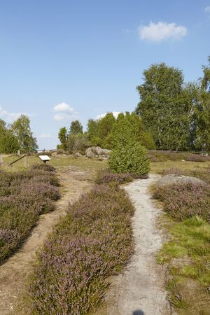 sustainable tourism: A small path leads through the heathland (landscape) of the Luneburg Heath (Germany) near the small town Wilsede (Lower Saxony, Rural District Harburg).