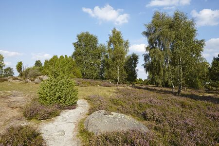 sustainable tourism: A stone lays beneath a small path that leads through the heathland (landscape) of the Luneburg Heath (Germany) near the small town Wilsede (Lower Saxony, Rural District Harburg).