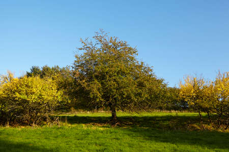 autumnally: Some trees and bushes in fall with yellow and green leaves photographed in sunshine and blue sky.