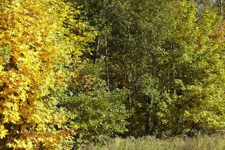 broadleaf: The edge of a wood with many trees that have green and yellow leaves photograpfed at sunny daylight.