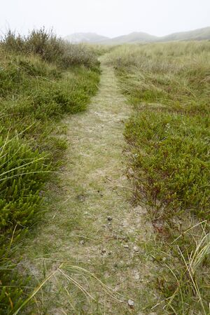 A small path leads through grass-covered sand dunes on the isle Amrum (Germany, Schleswig-Holstein, North Frisia) at foggy weather.