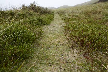 小さなパスは、霧深い天候で島 Amrum (ドイツ、シュレースヴィヒ = ホルシュタイン州、北フリージア) に草に覆われた砂丘を介して します。
