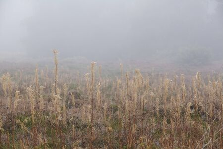 autumnally: A landscape on the Isle of Amrum (Germany, Schleswig-Holstein, North Frisia) photographed at fog.