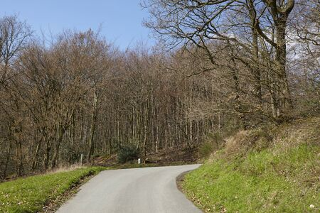 A small road leads uphill and bends in front of an edge of a wood. Stock Photo