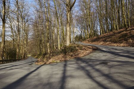 A hairpin bend of a serpentine leads uphill into a forest. The sunlight draws many shadows of the trees on the small road.