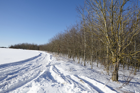 Bald trees stand into a snowscape with some skid marks in the snow at a sunny day with a bright blue sky. Stock Photo