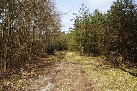 A path leads into a nature reserve (forest) near Schneverdingen (Germany, Lower Saxony, County Heidekreis).