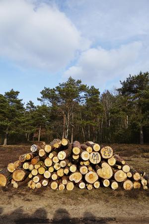 boles: A pile of tree boles lays at an edge of a forest near Schneverdingen (Germany, Lower Saxony, County Heidekreis). Stock Photo