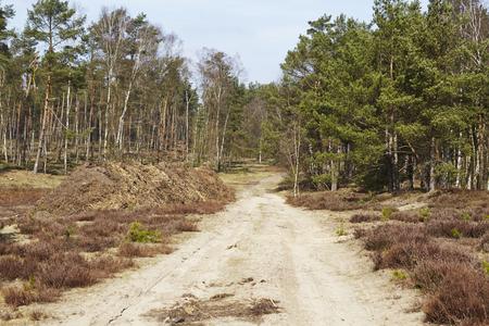 A sandy forest road leads into a wood near Schneverdingen (Germany, Lower Saxony, County Heidekreis).