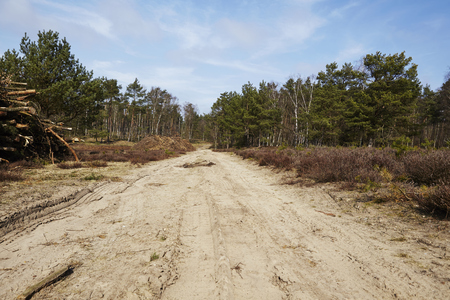 A sandy forest road leads into a wood near Schneverdingen (Germany, Lower Saxony, County Heidekreis). Stock Photo - 79830040