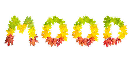 colorfully: photo of colorfully leaves in shape of word MOOD on white background
