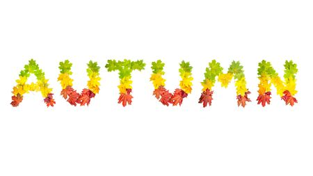 colorfully: photo of colorfully leaves in shape of word AUTUMN on white background Stock Photo