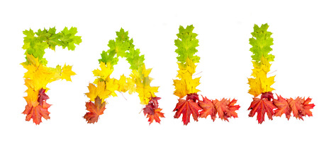 colorfully: photo of colorfully leaves in shape of word FALL on white background