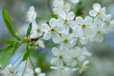 many little white tree flowers