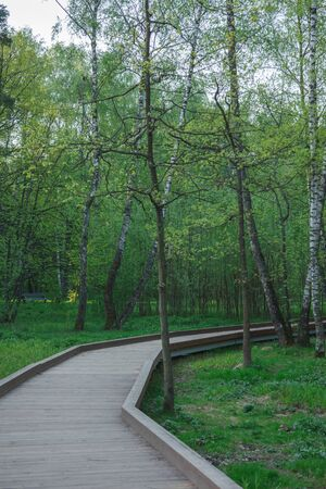 wooden road in green serene tree without people