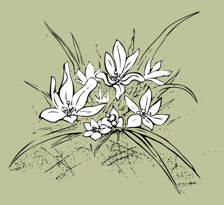 Edelweiss on khaki green background Иллюстрация