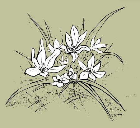 Edelweiss on khaki green background Illustration
