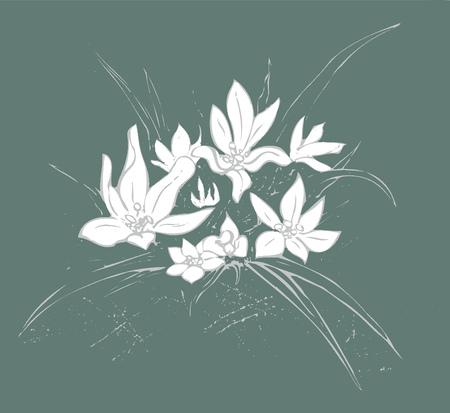 Edelweiss on dark background