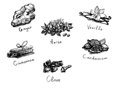Spices food set illustration on white background.