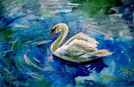 Swan Ilustrace