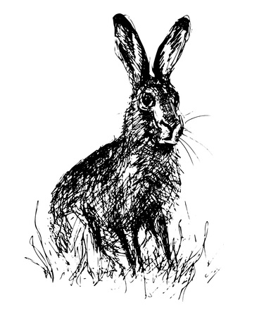 Sitting hare in hand drawn sketch style illustration.
