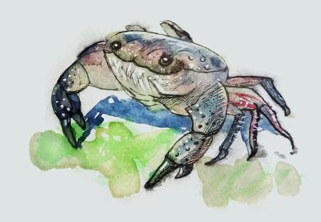 Colorful crab illustration design. Illustration