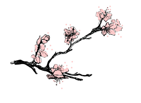 Sakura. Cherry branch in blossom  イラスト・ベクター素材