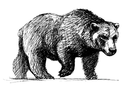 Walking bear. Line realistic drawing illustration design Vettoriali