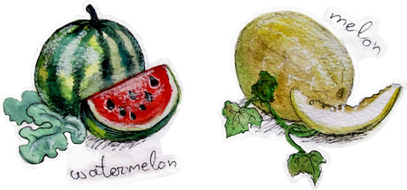 Melons in watercolor vector illustration design.