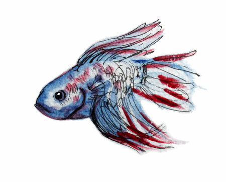 Veiltail fish. Graphic sketch with watercolor. Vector illustration