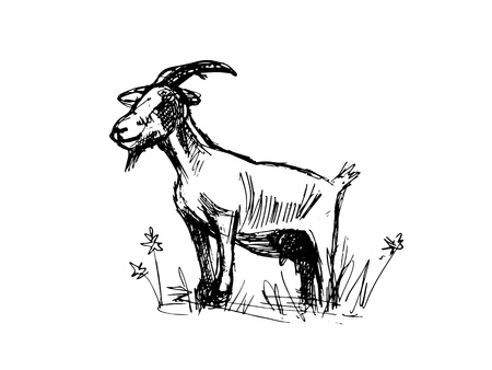 Goat sketch. Realistic drawing drawing