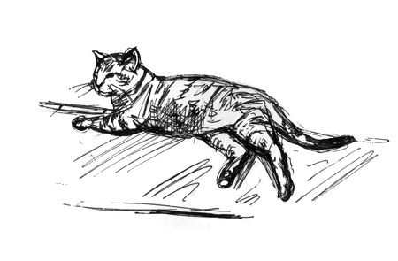 Lying cat sketch. Realistic drawing drawing