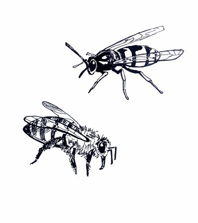 Wasp and bee. Line drawing Foto de archivo - 130148716