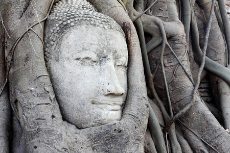 ayutthaya: The head of Buddha at Wat Mahathat in Ayutthaya Thailand.