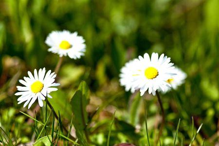 Springtime  Standard-Bild