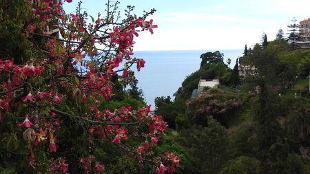 Park in Funchal