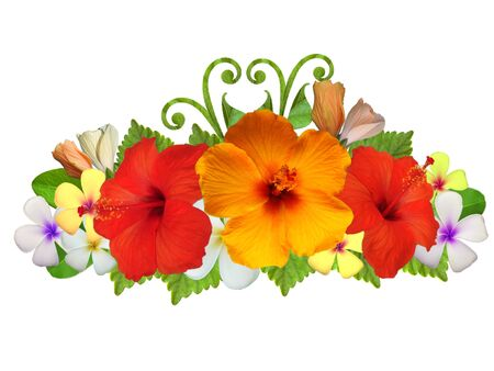Hibiscus flowers in different colors Stock Photo
