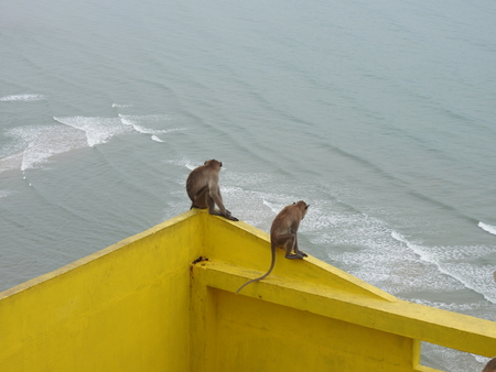 Monkeys in a temple complex in Thailand