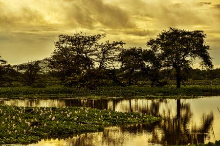 Landscape pictures of Sri Lanka