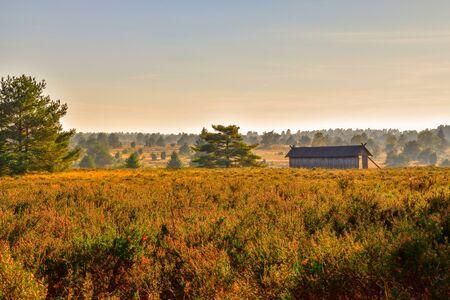 Golden autumn in the Lueneburg Heath near Undeloh