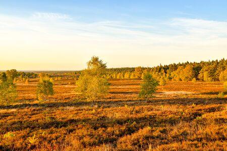 Golden autumn in the L?neburg Heath near Undeloh