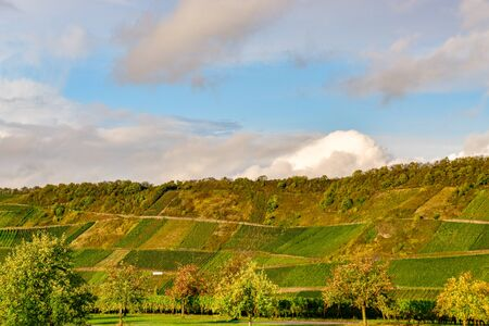 Wine landscape near Cochem and Leiwen on the Mosel Stockfoto - 132099967