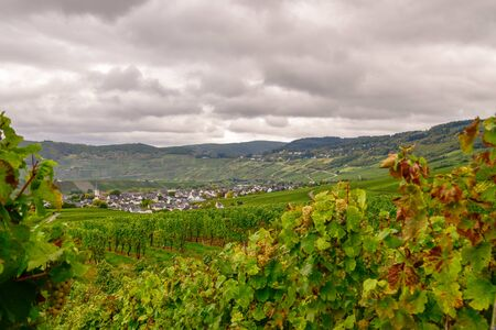 Wine landscape near Cochem and Leiwen on the Mosel Stockfoto - 132099763