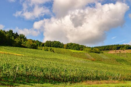 Wine landscape near Cochem and Leiwen on the Mosel Stockfoto - 132099966