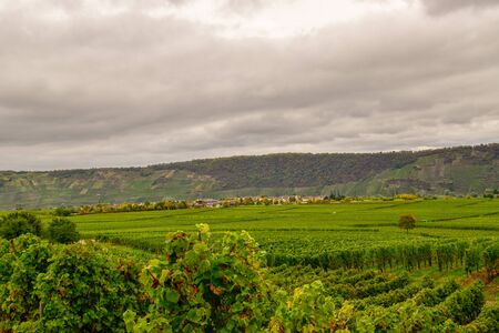 Wine landscape near Cochem and Leiwen on the Mosel Stockfoto - 132103099