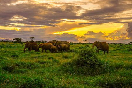 Elephants in the Amboseli National Park in Kenya Stock Photo
