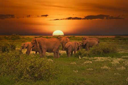 Elephants and sunset in the Tsavo East and Tsavo West National Park in Kenya