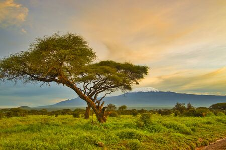 Pictures of the snow-covered Kilimanjaro in Tanzania 写真素材