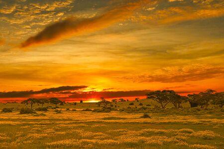 Coucher et lever de soleil dans le parc national de Tsavo Est, Tsavo Ouest et Amboseli Banque d'images